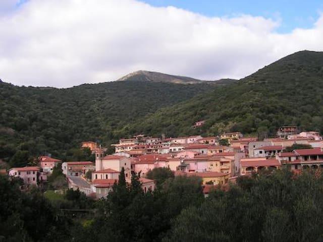 Brunella:  mare e montagna - Brunella