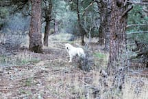Hiking in the Pinon Pine forests on the property is a great way to get out of the sun when it's warm.