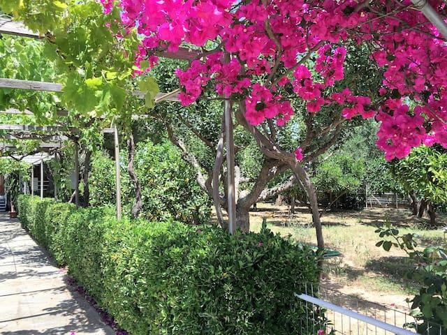 Μονοκατοικία στην παραλία Μαραθώνα με υπέροχο κήπο - Agios Panteleimon