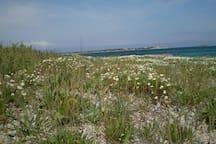La spiaggia di Sa Rocca Tunda in primavera
