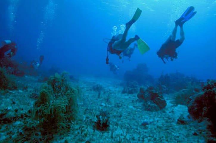 Possibilità di effettuare immersione subacquee, per scoprire il meraviglioso mondo sottomarino.