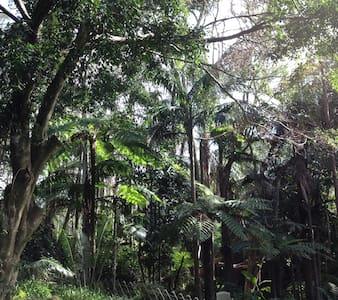 Rainforest Retreat - Bed & Breakfast