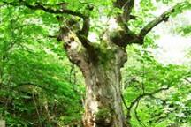 bid horse chestnut on way to Mt. Morai/茂来山道途中のこぶ太郎