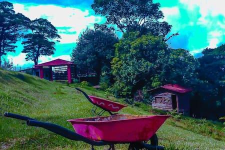 ACAMPAR,YOGA, PICNIC - San Isidro