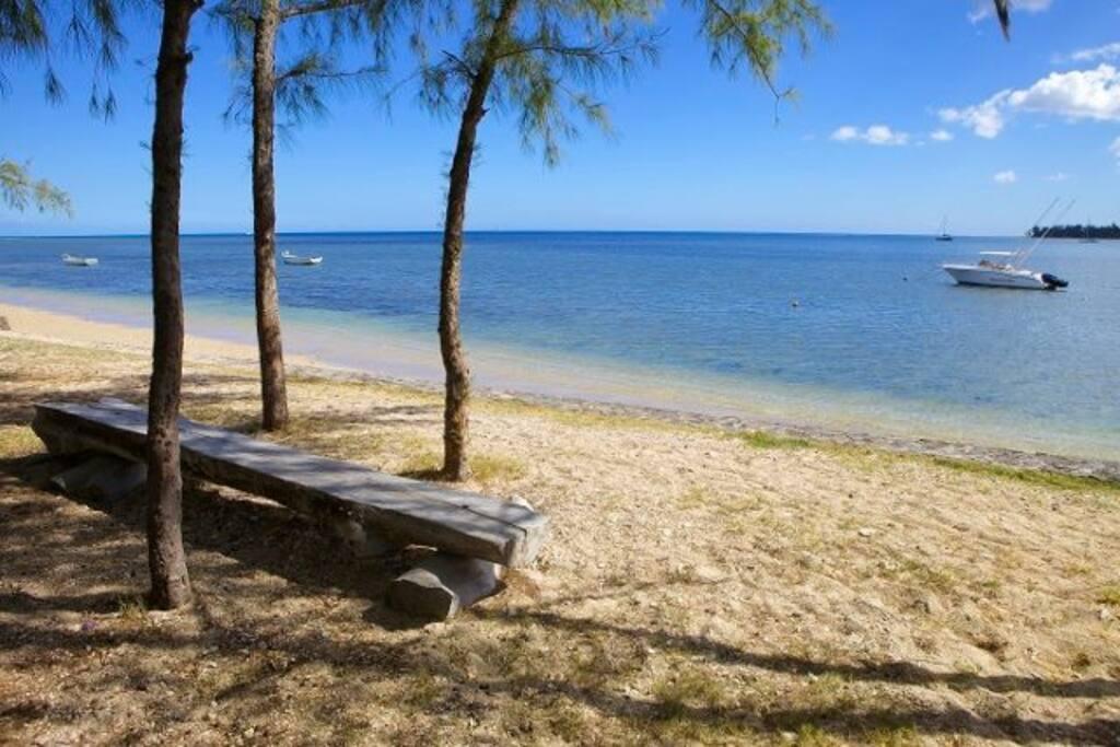 La plage des Salines et ses Filaos/Filao trees and Les Salines Beach