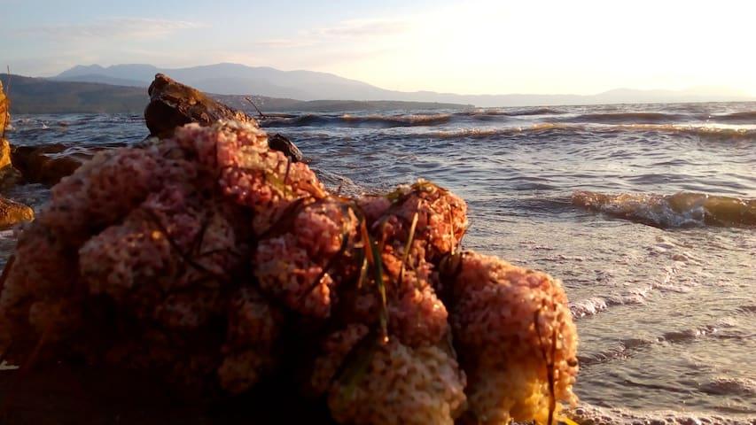 Sea sponge at the beach!