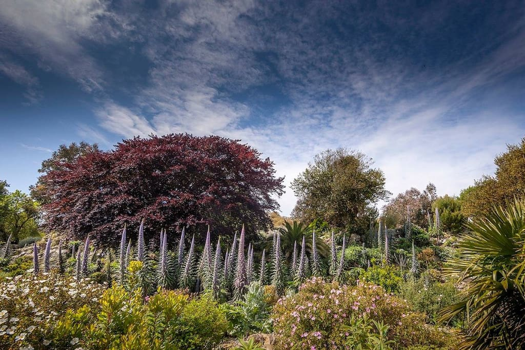 You'll have complimentary after-hours access to the world renowned Ventnor Botanic Garden