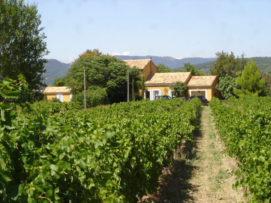 caché au milieu des vignes au pied du Mont Ventoux
