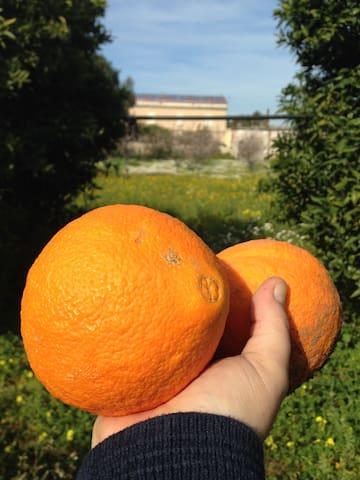 Arance! Oranges!