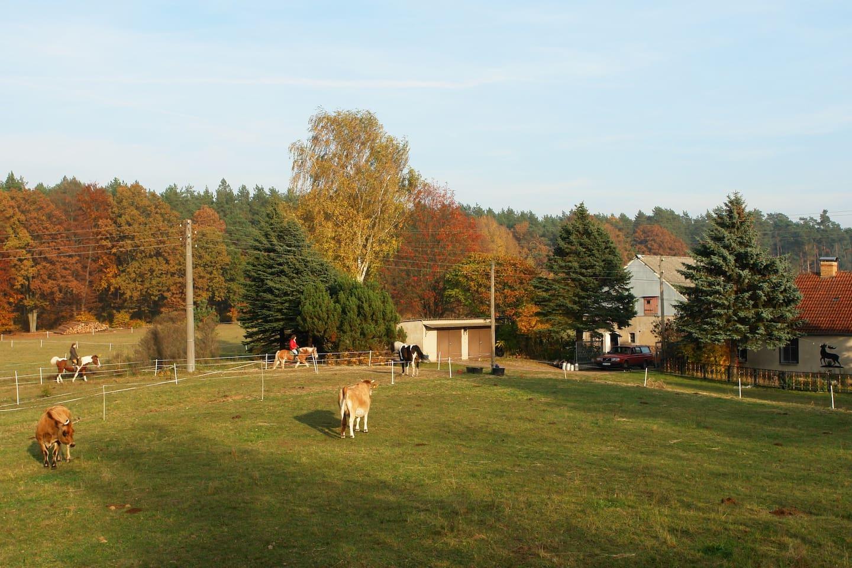 Bauernhof in sehr ruhiger Außenlage