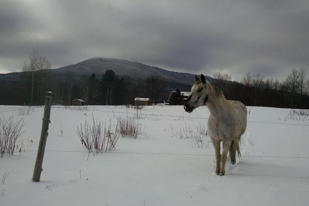 Host Horse