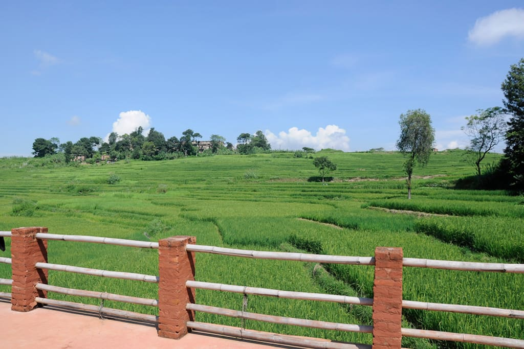 During the rice season