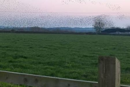 Daisy Chains  - The starlings are moving in