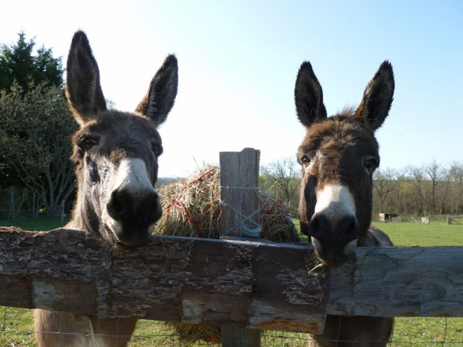 Samson & Delilah - our donkeys