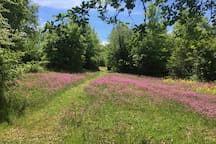 Morning walk in our natural garden. It is impossible to describe the beauty of the wild flowers that naturally grow and bloom all around the villa