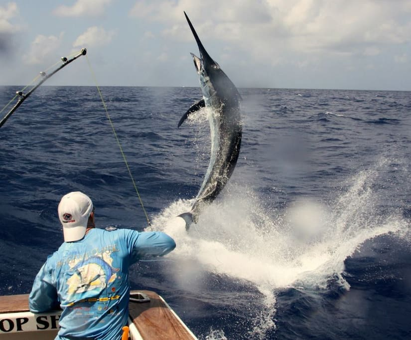 Sport Fishing Club of Ponce with marine vessel and private sea tours for visitors such as  Isla de Los Ratones which you can see from the balcony of your seafront vacation home!