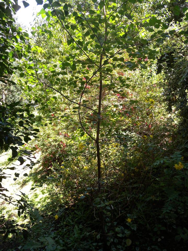 Independent 1B&B beautiful garden