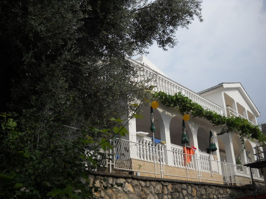 House is surrownded with olive trees and covered in grape vines.
