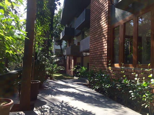 Oasis of Trees near Iyengar Yoga