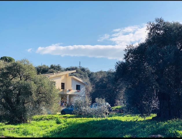 Aghsan Olive Grove