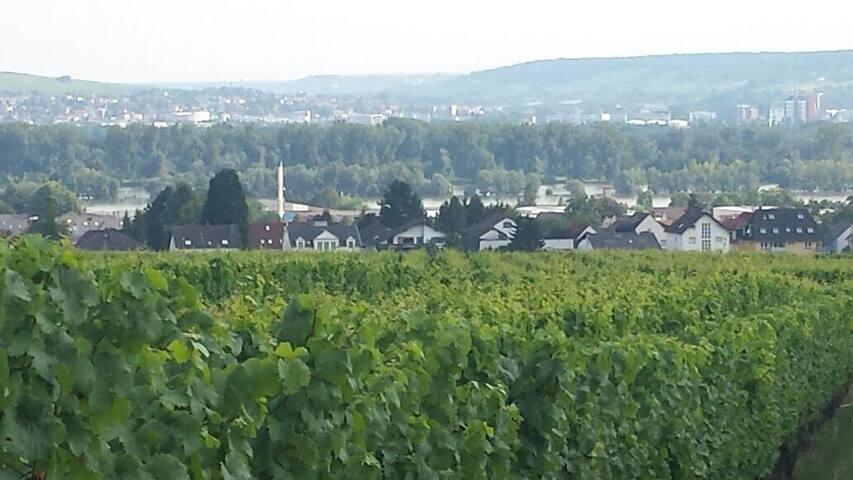 Gäste Ferienwohnung im Weingut Leis