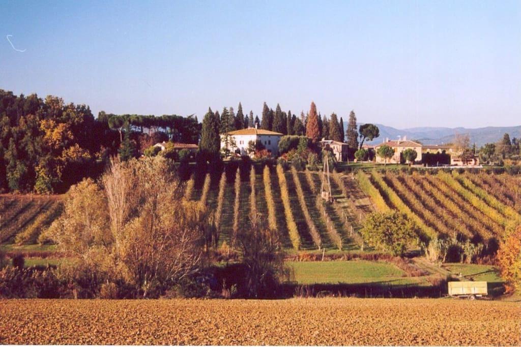Villa La Morina - Cortona