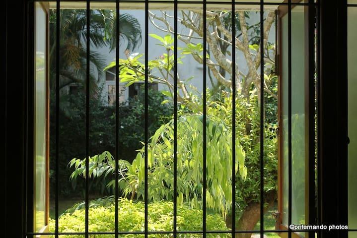 Views into the garden