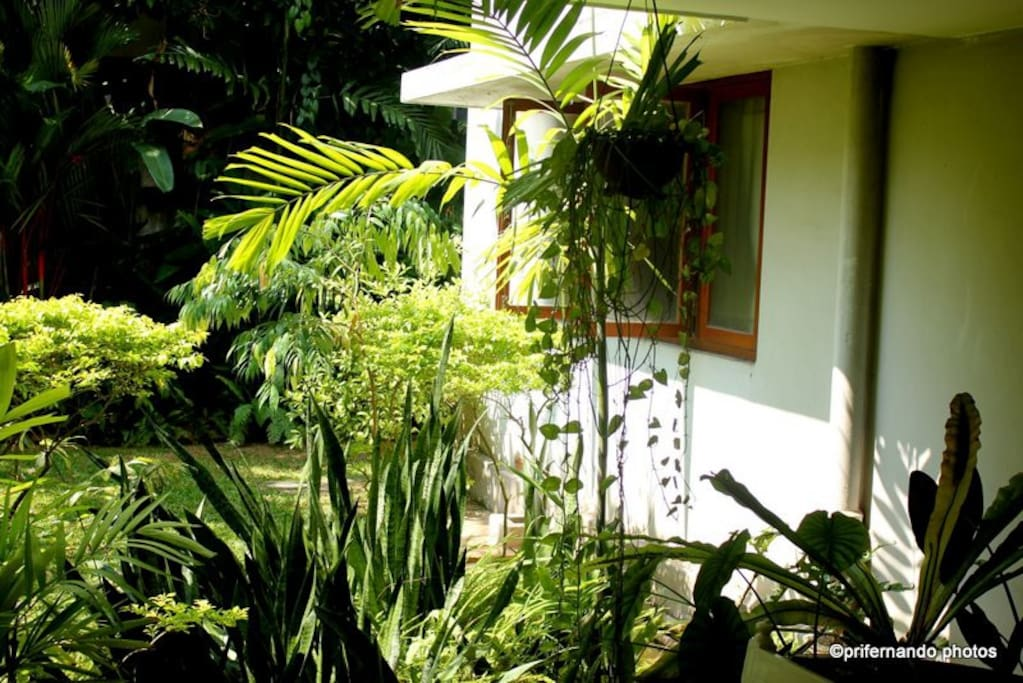 The garden by the stone verandah