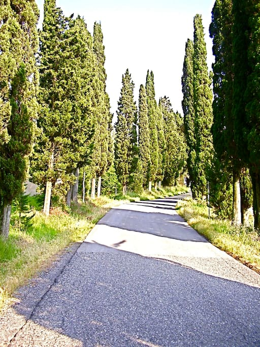 Libbiano is situated on top of a hill in the middle of the Tuscan countryside and the road up to it is lined with cypress tress.