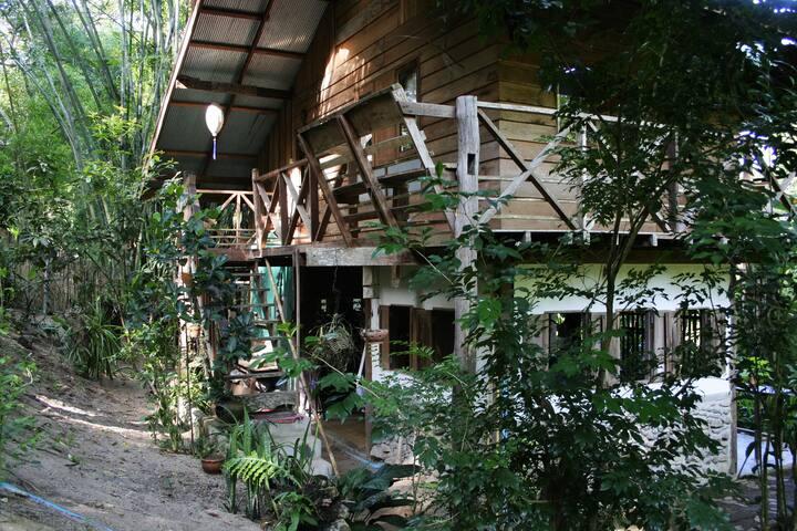 Jungle hide away