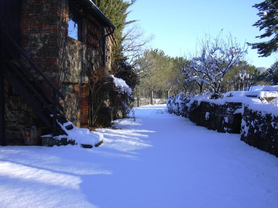 stellina d'inverno