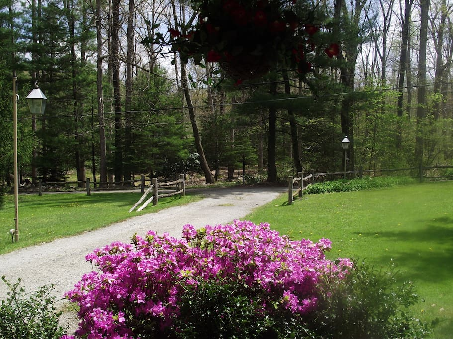 View from our porch swing in the spring