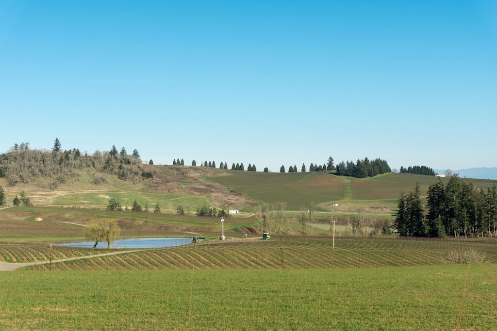 Fantastic views of the vineyards of the Eola-Amity Hills