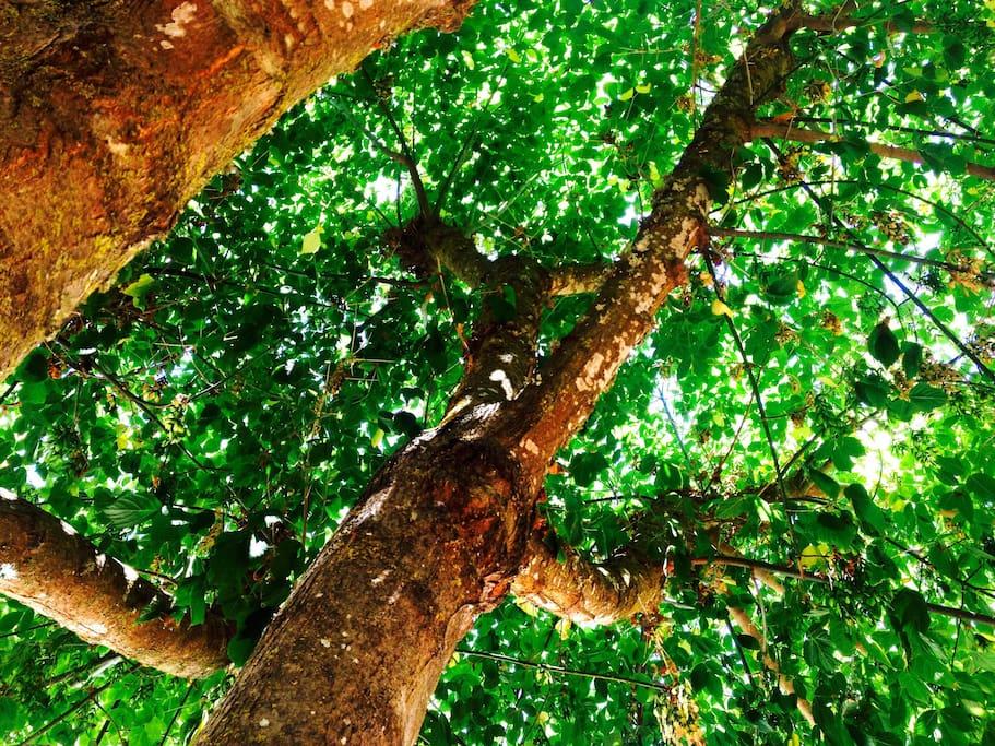 A Árvore / The tree