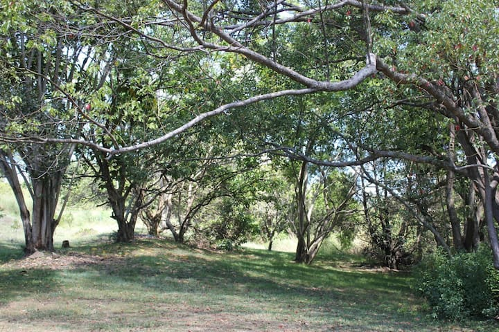 Mullumbimby's Eden on acreage