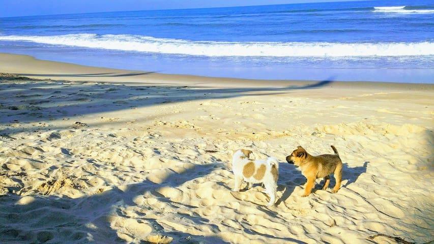 Sleepy Beach Bungalow  free breakfast - Đồng Hới