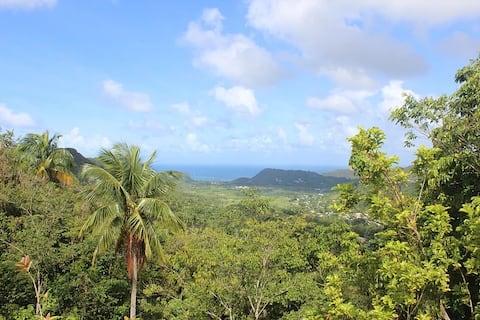 Woodsview Estate | Birdwatching | Nature Tours