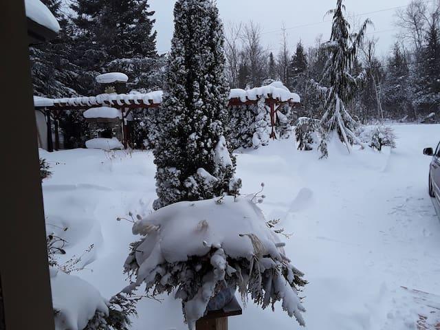 Winter Delight