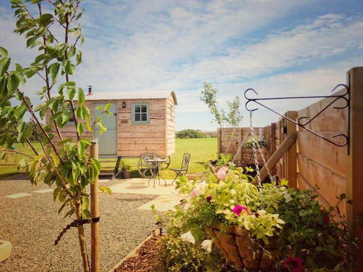 Cwt Bugail Bedo- Bedo Shepherd's Hut on Anglesey