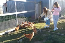 Guests often enjoy feeding the chickens & sheep in the morning..............