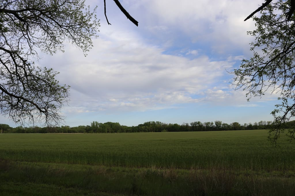 View of Farmland from backyard