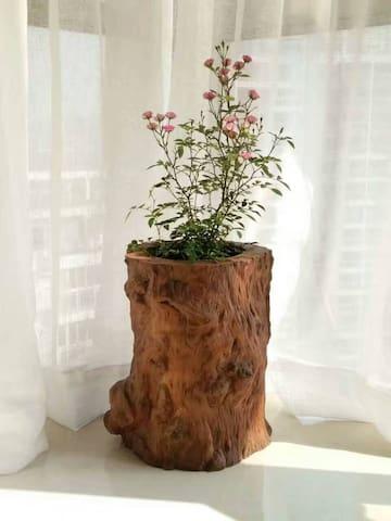 飘窗上的花儿。