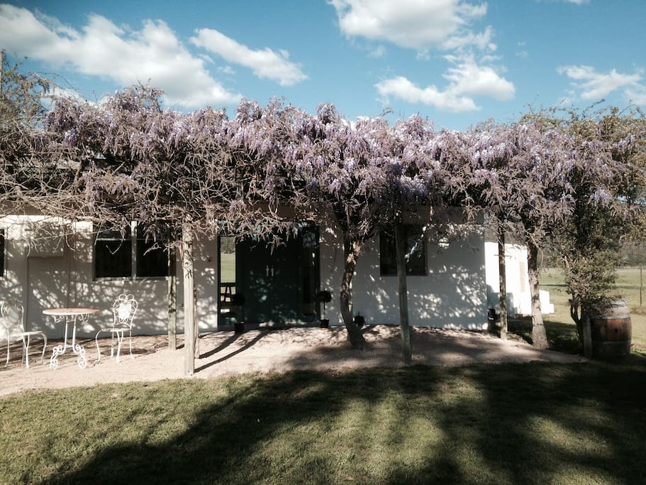 Deer Cottage with wisteria in bloom