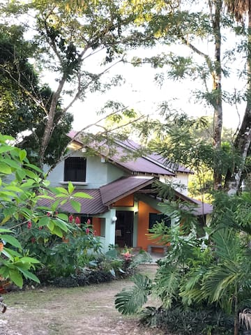 Plasmann Jungle House