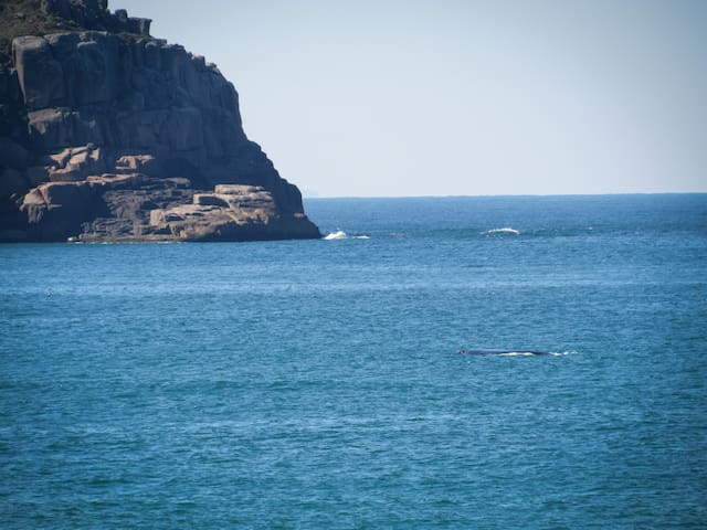 Baleia Franca na Praia do Rosa entre julho e outubro.