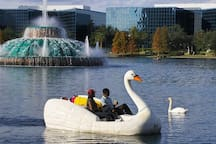 Be a true local and ride a swan boat around Lake Eola!
