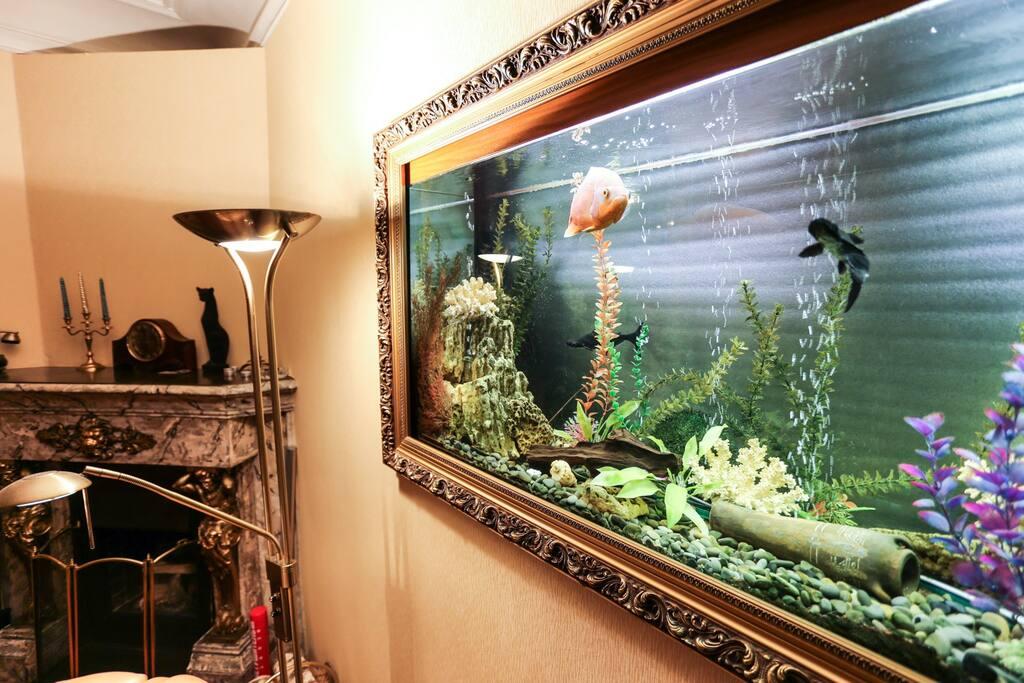 Большой аквариум на 600 литров