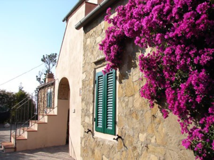 Buganvillea on the walls