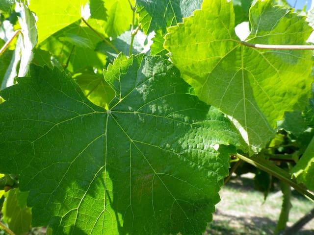 Magnifique maison vigneron, jardin - Arbois - Dům