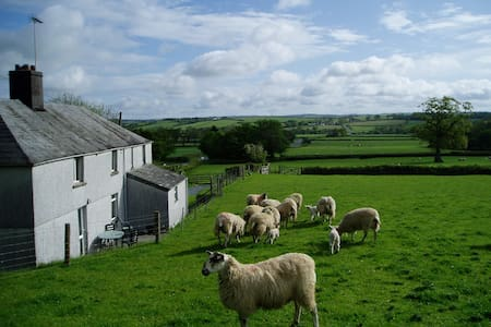 Detached Cottage on working farm. - Launceston - House